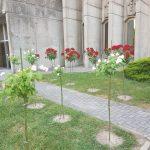 Ruže za Majku